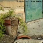 Taken by Anne Marie Camilleri